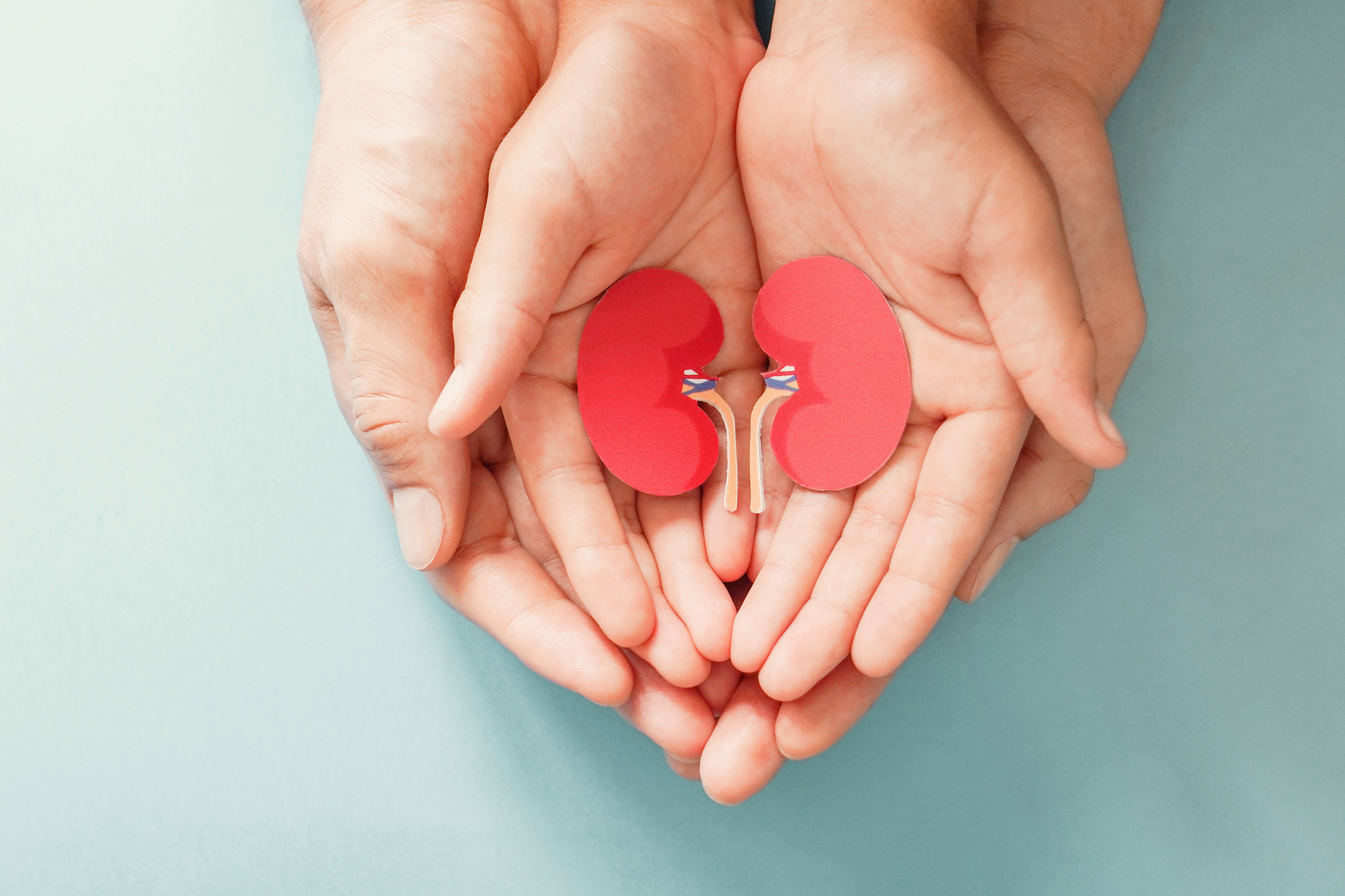 adult and child holding kidney shaped paper